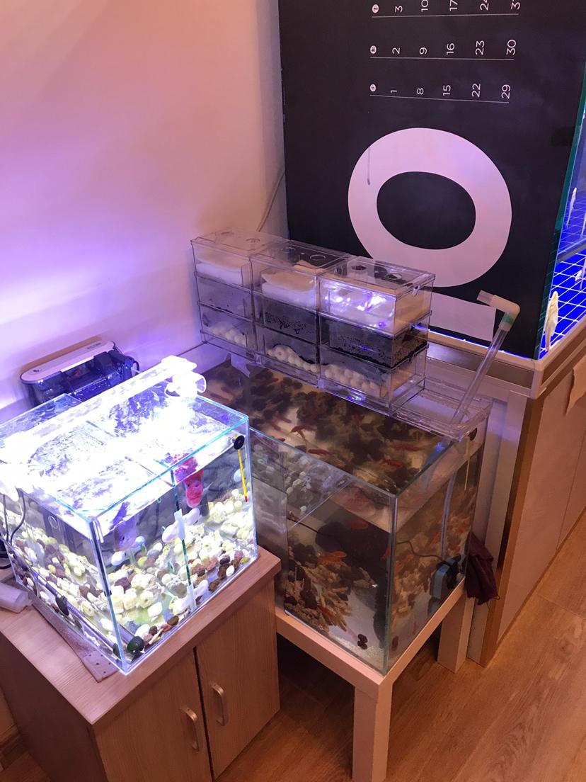 【西安可丽爱水族馆】大家都说我的鱼缸小我又弄了一个 西安观赏鱼信息 西安博特第2张