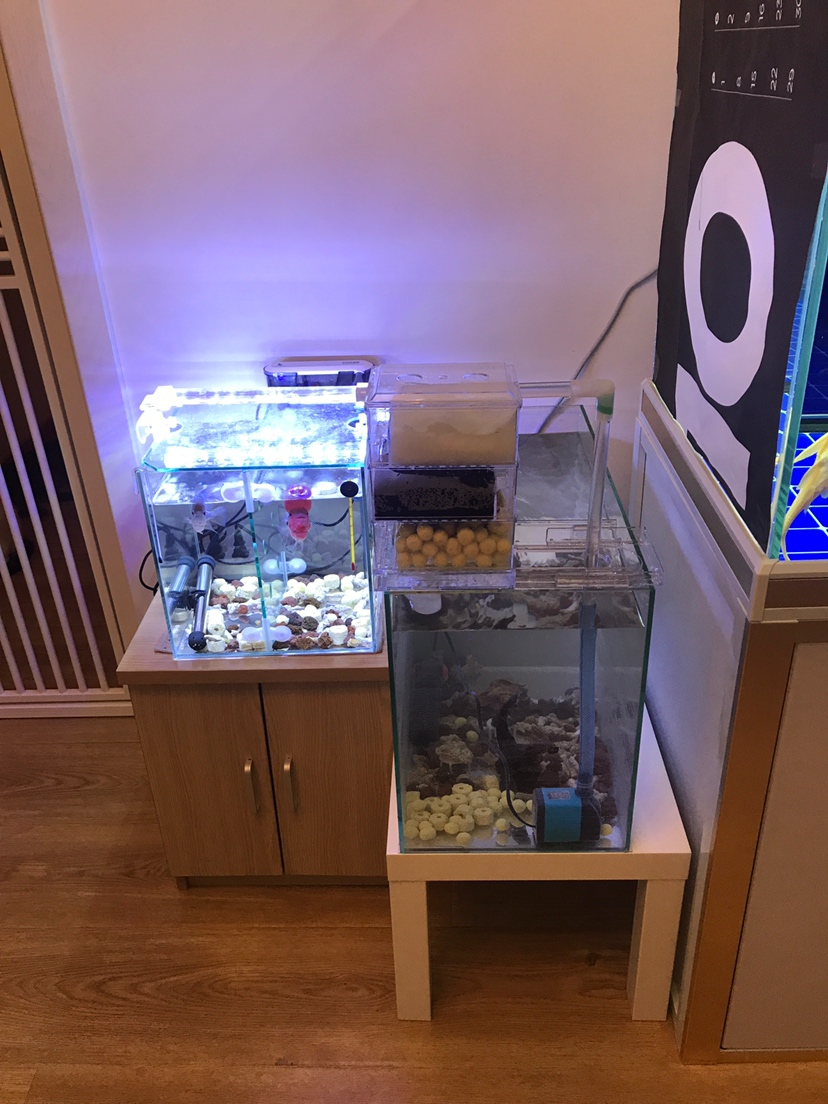 【西安可丽爱水族馆】大家都说我的鱼缸小我又弄了一个 西安观赏鱼信息 西安博特第3张