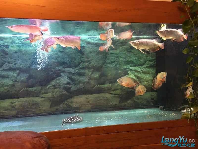 九龙四猪三魟 西安观赏鱼信息 西安博特第2张