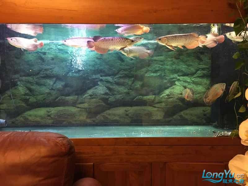 九龙四猪三魟 西安观赏鱼信息 西安博特第7张