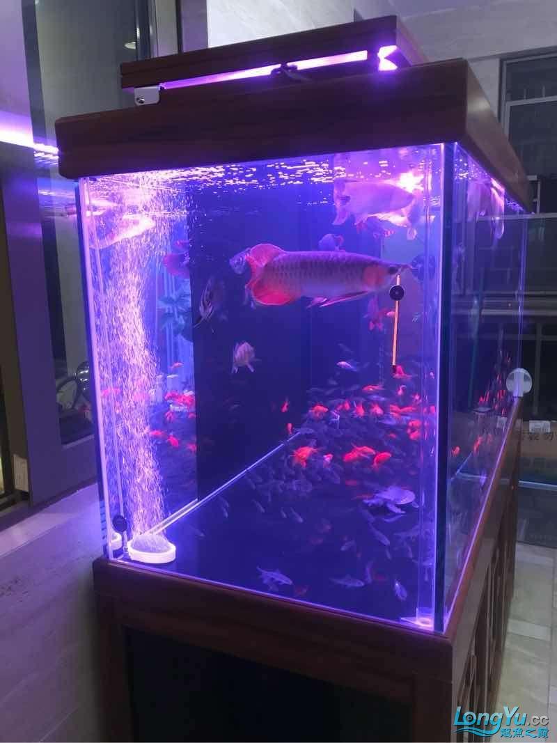 新年住新缸 西安龙鱼论坛 西安博特第2张