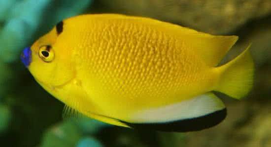 我刚从鱼友那收的斑马贝没几天出小鱼了问问大伙喂 西安观赏鱼信息 西安博特第4张