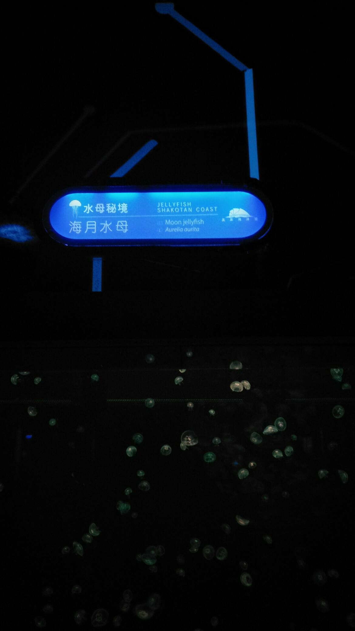 【西安印尼红龙鱼】北京海洋馆一日游申精 西安观赏鱼信息 西安博特第3张