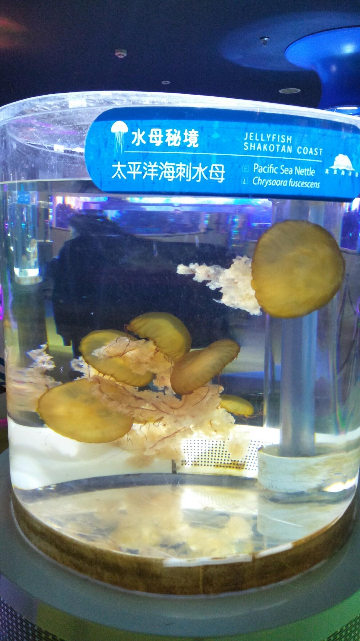 【西安印尼红龙鱼】北京海洋馆一日游申精 西安观赏鱼信息 西安博特第8张