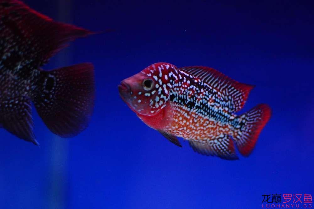 变态心理学辐射整个鱼圈 西安观赏鱼信息 西安博特第1张