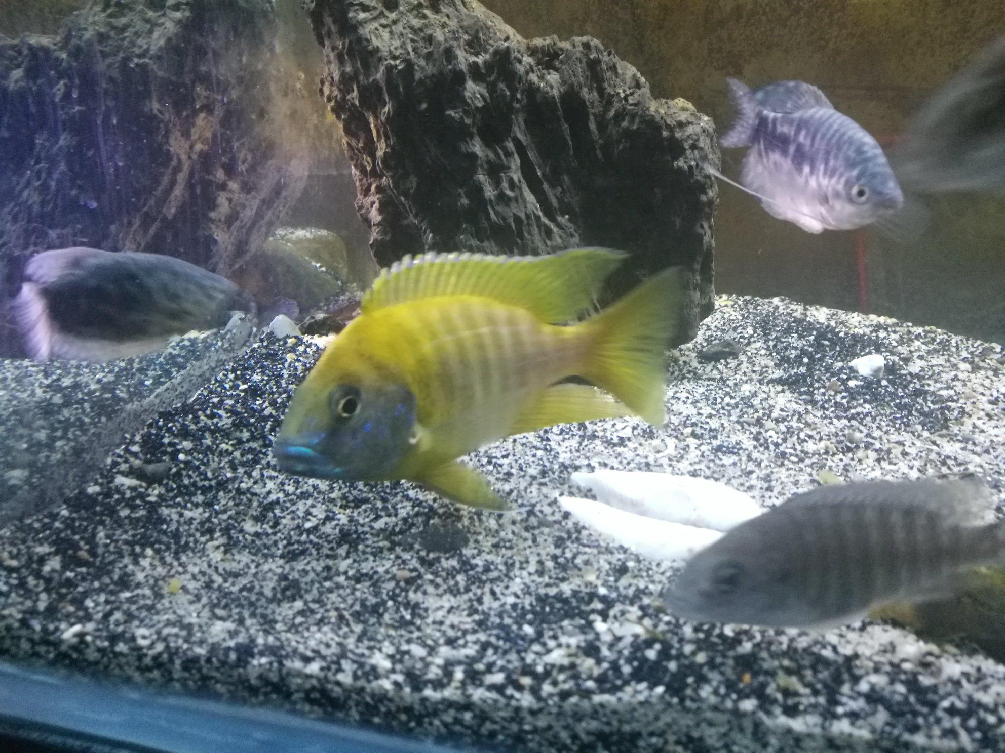 三湖金松鼠繁殖记录 西安观赏鱼信息 西安博特第2张
