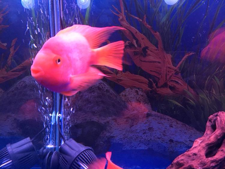 水质好了鱼儿健康活泼了