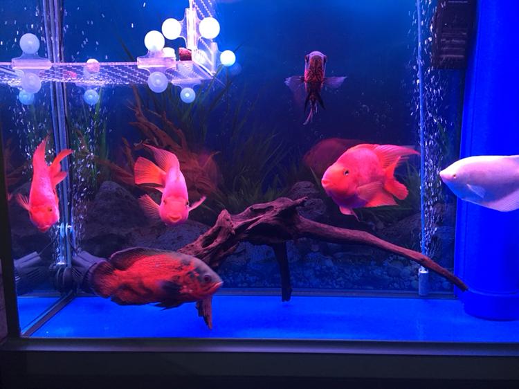 水质好了鱼儿健康活泼了 西安观赏鱼信息 西安博特第5张