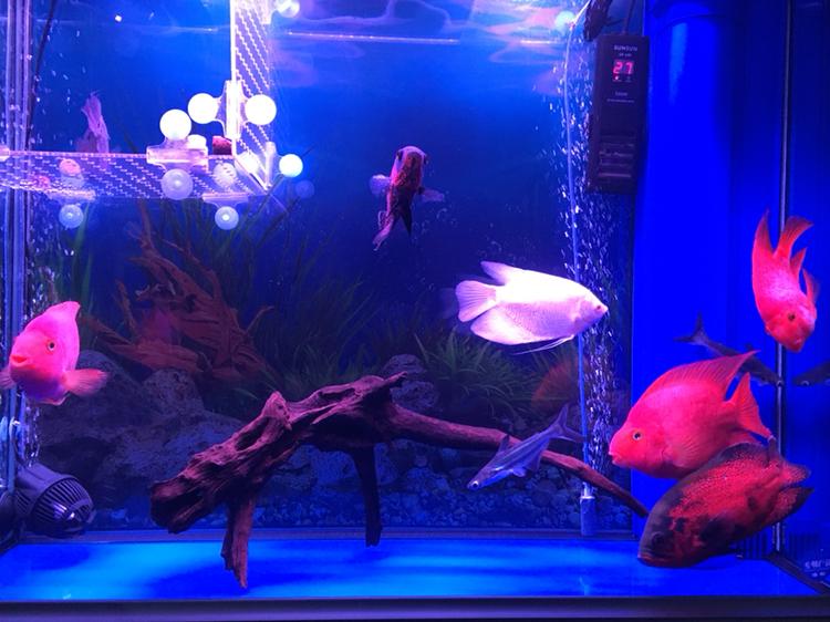 水质好了鱼儿健康活泼了 西安观赏鱼信息 西安博特第4张