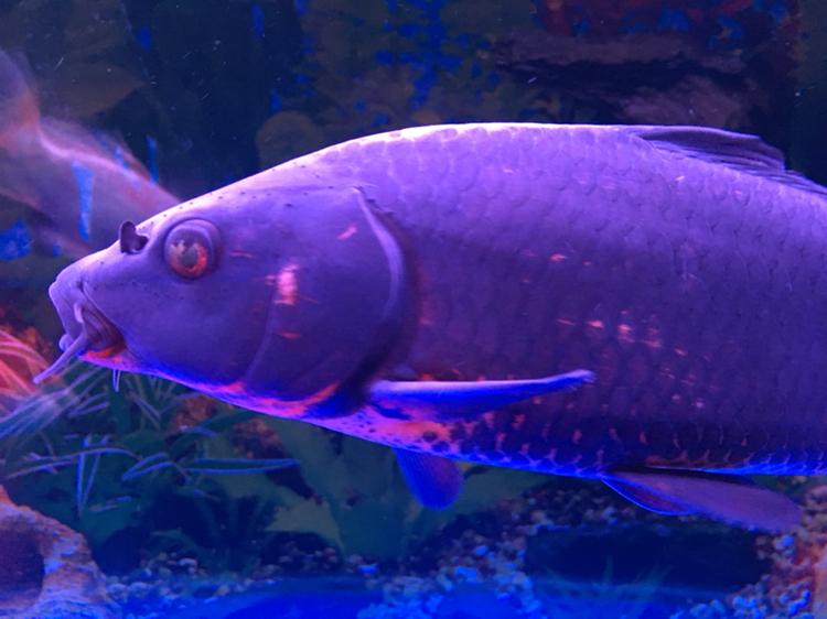 头上这个没事吧?胡须还能长出来么? 西安观赏鱼信息 西安博特第4张