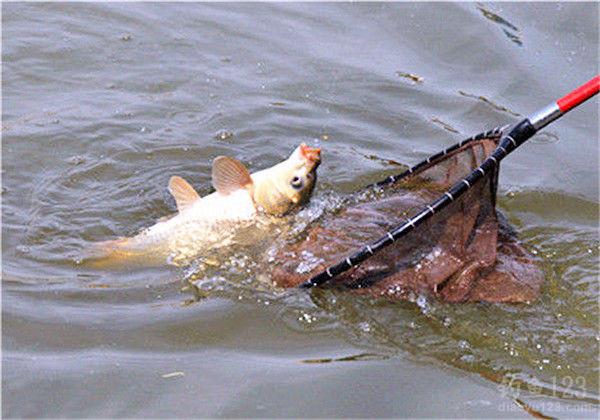 头上这个没事吧?胡须还能长出来么? 西安观赏鱼信息 西安博特第5张