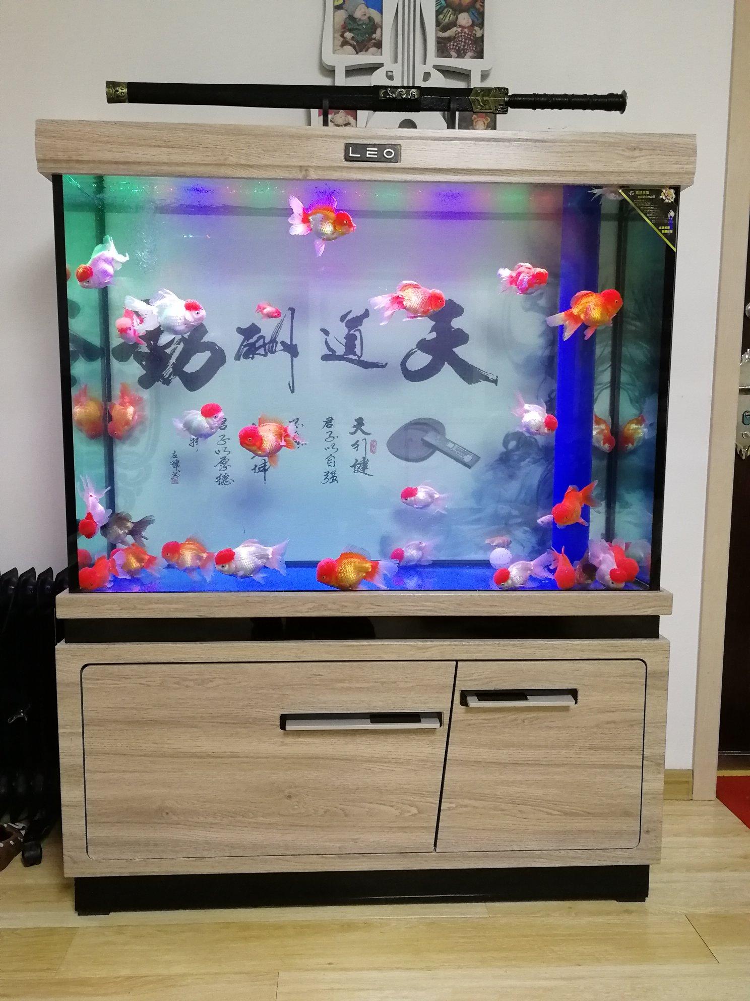 新手求助 西安观赏鱼信息 西安博特第1张