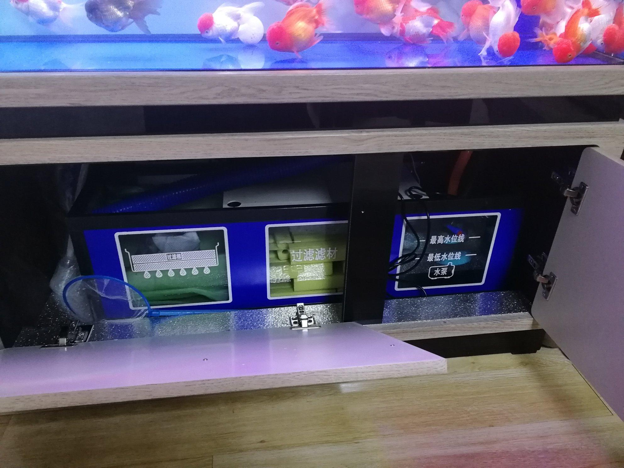新手求助 西安观赏鱼信息 西安博特第3张