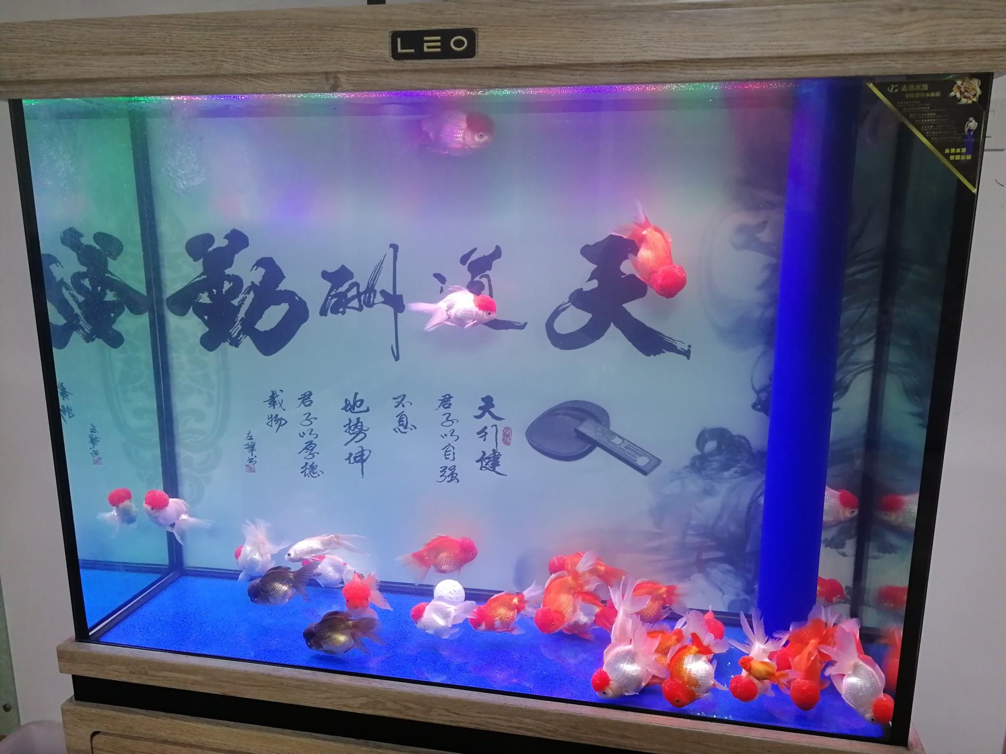 新手求助 西安观赏鱼信息 西安博特第2张