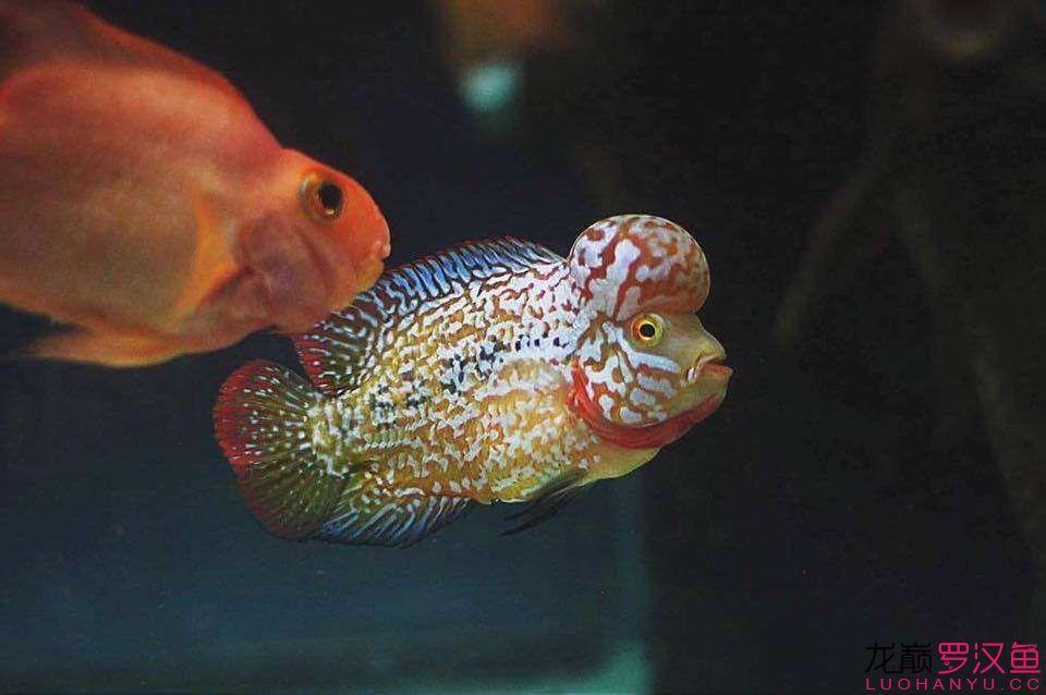 鱼友元旦快乐