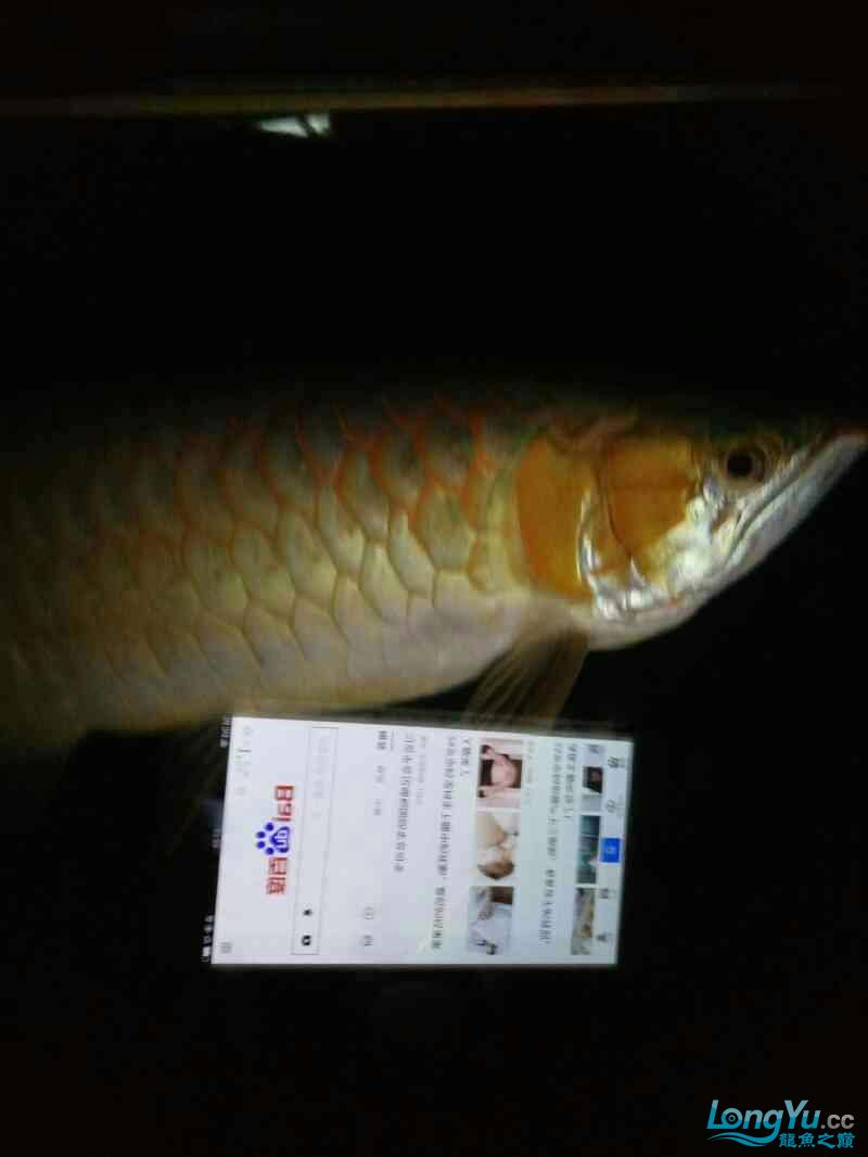 开灯的不开的都有想看的加微信18232827186 西安龙鱼论坛 西安博特第6张