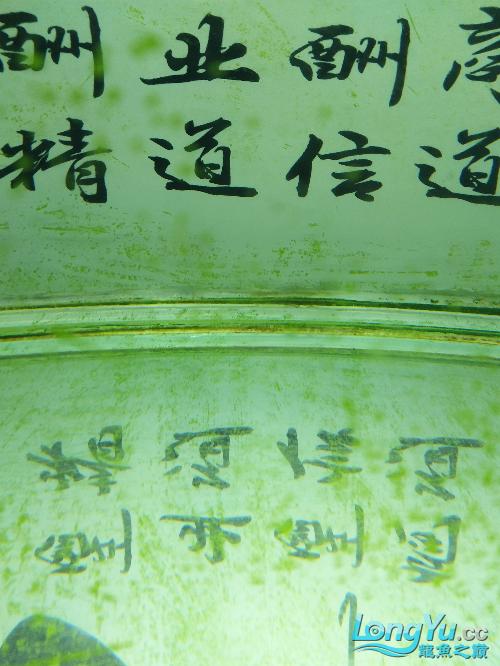 这是绿藻还是青苔? 西安龙鱼论坛 西安博特第4张