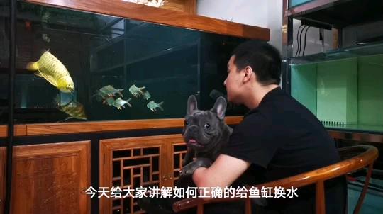 换水你换对了吗? 西安观赏鱼信息 西安博特第1张