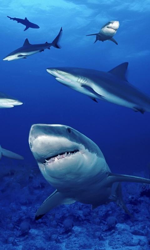 养了四年的金龙 西安观赏鱼信息 西安博特第3张