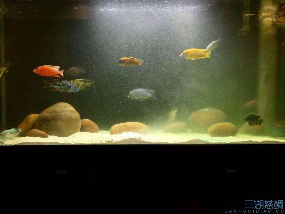 一次全缸下药治疗外寄的过程及结果分享 西安龙鱼论坛 西安博特第1张