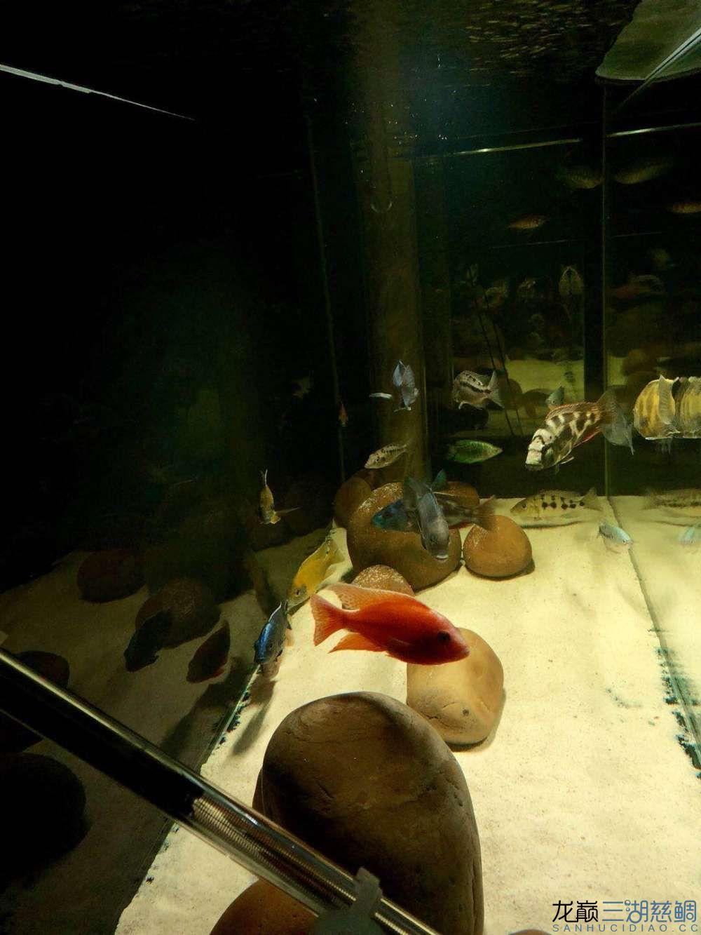 一次全缸下药治疗外寄的过程及结果分享 西安龙鱼论坛 西安博特第2张