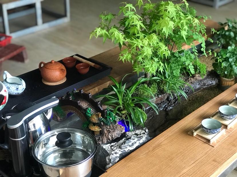 【西安红龙专卖】DIY生态茶几 西安龙鱼论坛 西安博特第4张