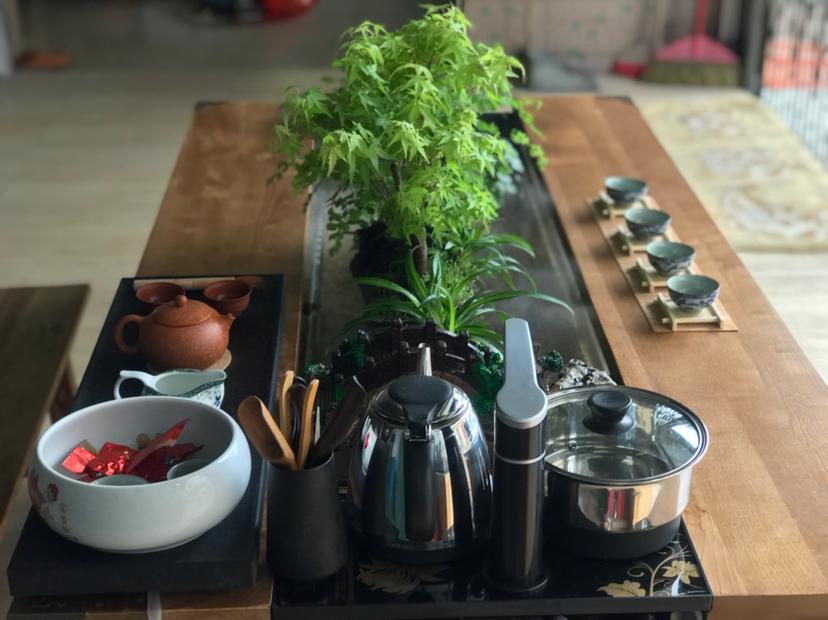 【西安红龙专卖】DIY生态茶几 西安龙鱼论坛 西安博特第3张