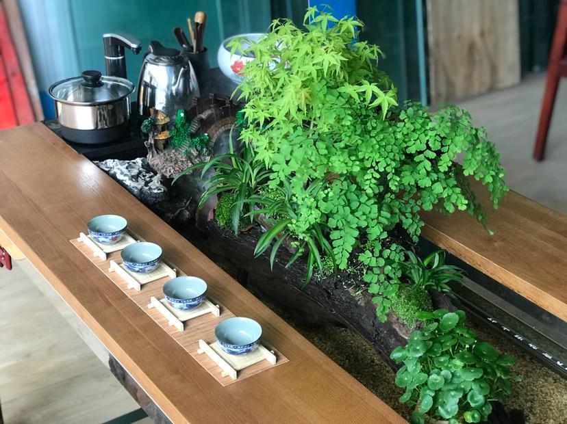 【西安红龙专卖】DIY生态茶几 西安龙鱼论坛 西安博特第6张