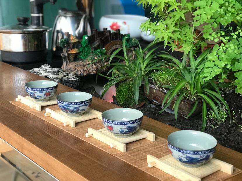 【西安红龙专卖】DIY生态茶几 西安龙鱼论坛 西安博特第8张