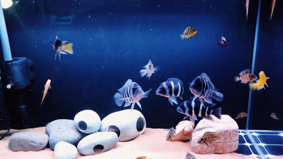 还是那个缸 还是那些鱼 西安观赏鱼信息 西安博特第1张