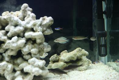 【西安鱼缸上门服务】金龙鱼鳃盖鱼鱼眼边缘变绿是怎么回事? 西安龙鱼论坛 西安博特第3张