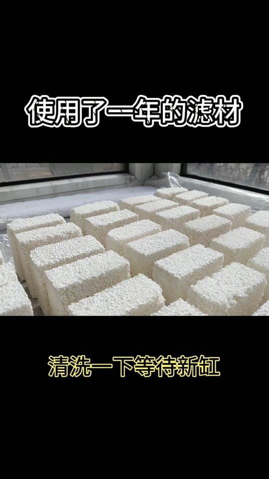 【西安帝王魟鱼】洗一洗给新缸留着 西安观赏鱼信息 西安博特第1张