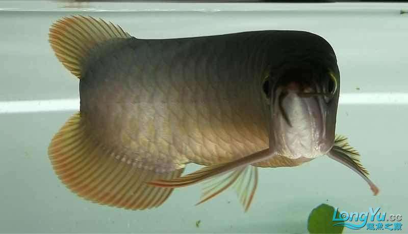 拉出来晒晒 西安观赏鱼信息 西安博特第1张