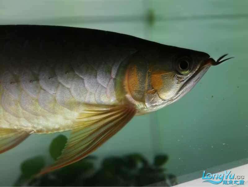 拉出来晒晒 西安观赏鱼信息 西安博特第2张