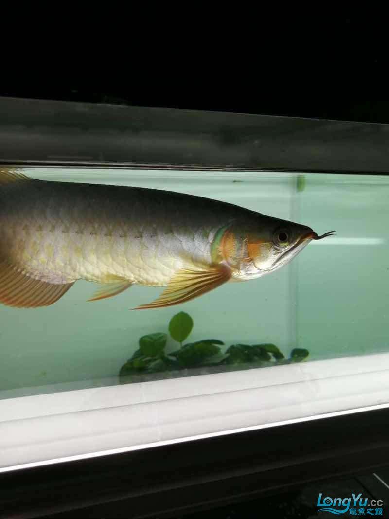拉出来晒晒 西安观赏鱼信息 西安博特第3张