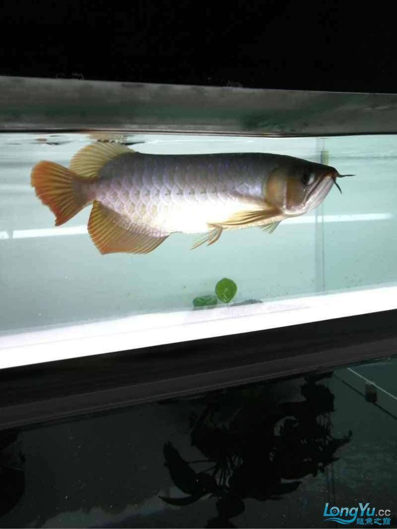 拉出来晒晒 西安观赏鱼信息 西安博特第4张