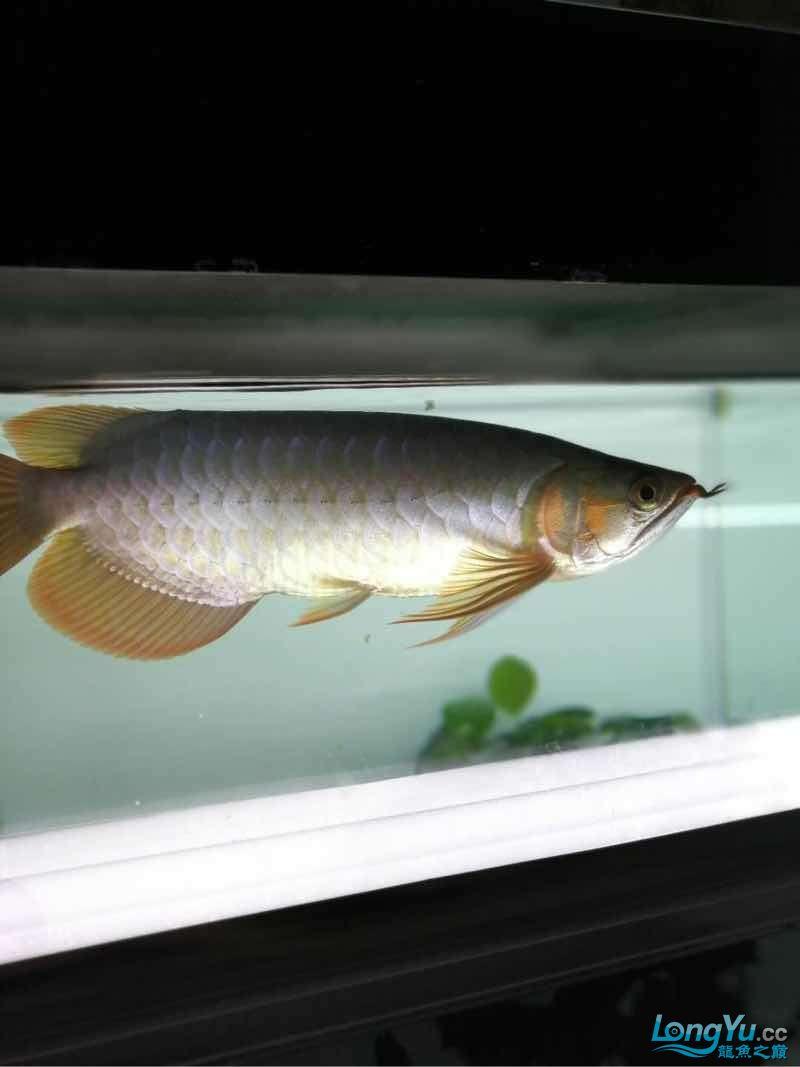 拉出来晒晒 西安观赏鱼信息 西安博特第5张