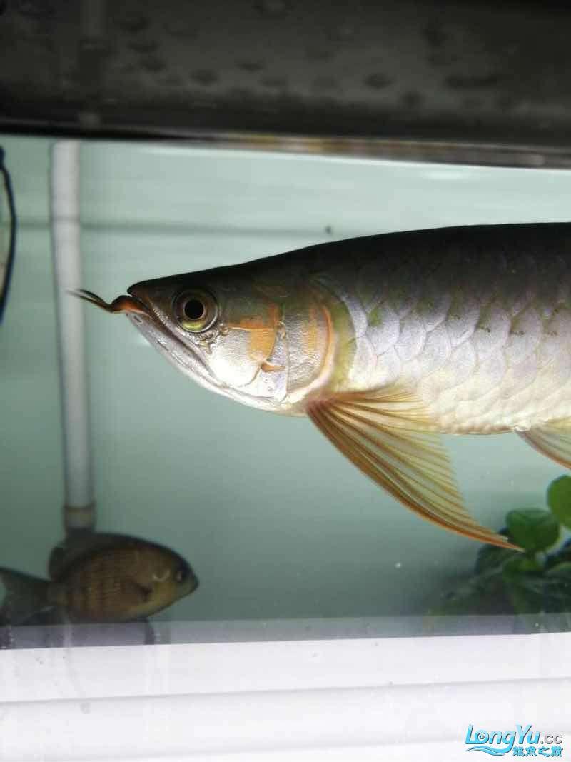 拉出来晒晒 西安观赏鱼信息 西安博特第6张