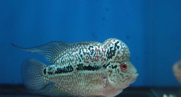 慢动作 西安观赏鱼信息