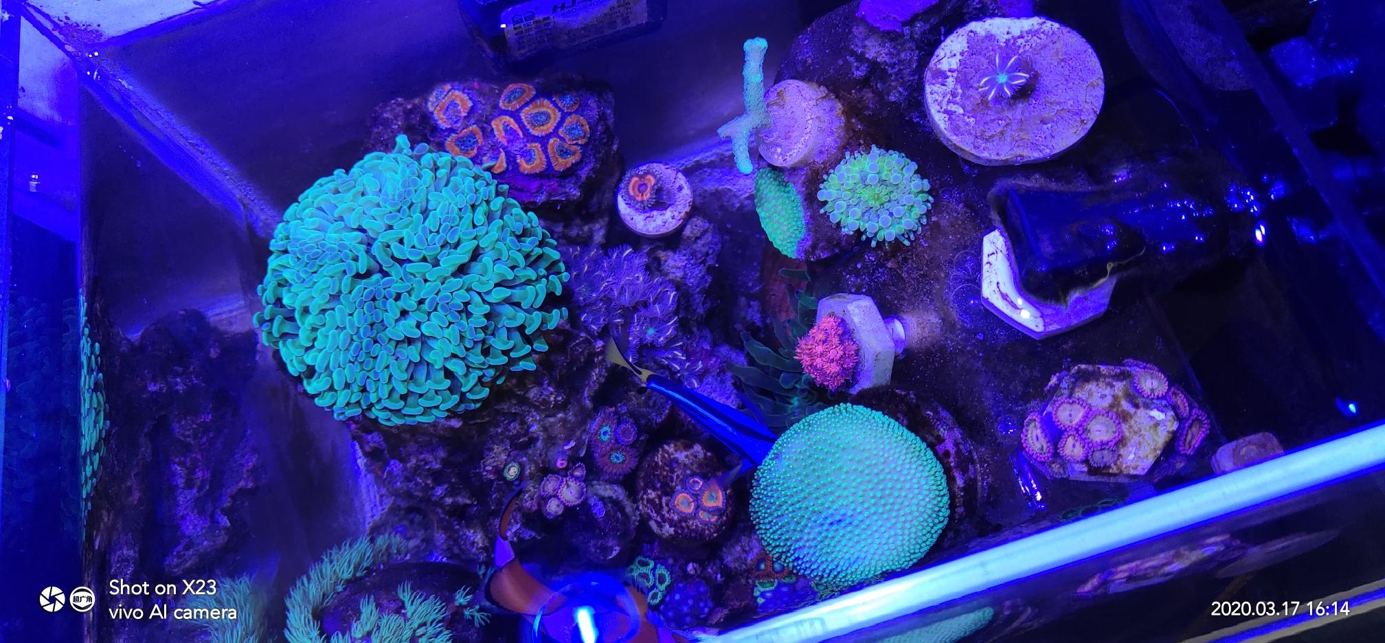 分享一个巴掌大的微缸已经运行6个月 西安观赏鱼信息 西安博特第2张