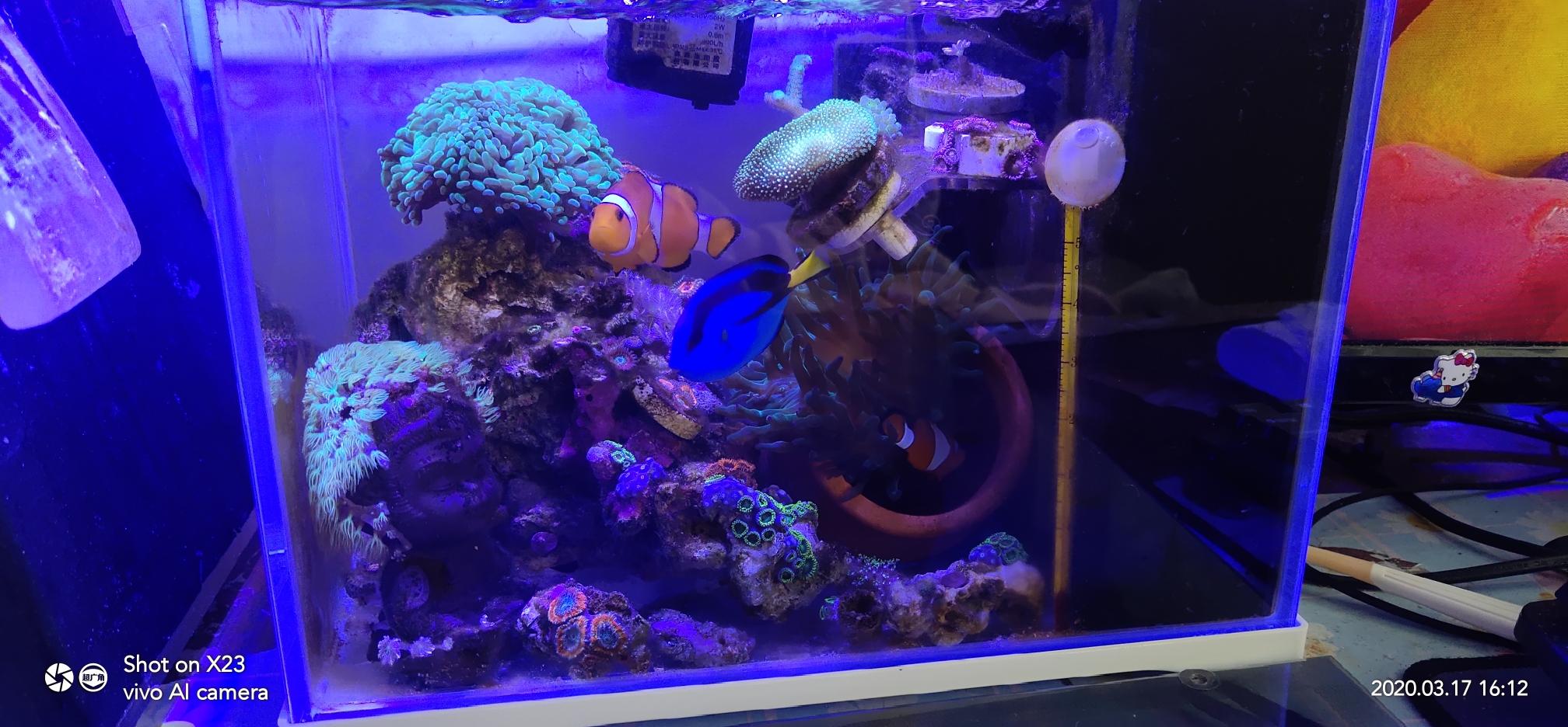 分享一个巴掌大的微缸已经运行6个月 西安观赏鱼信息 西安博特第5张