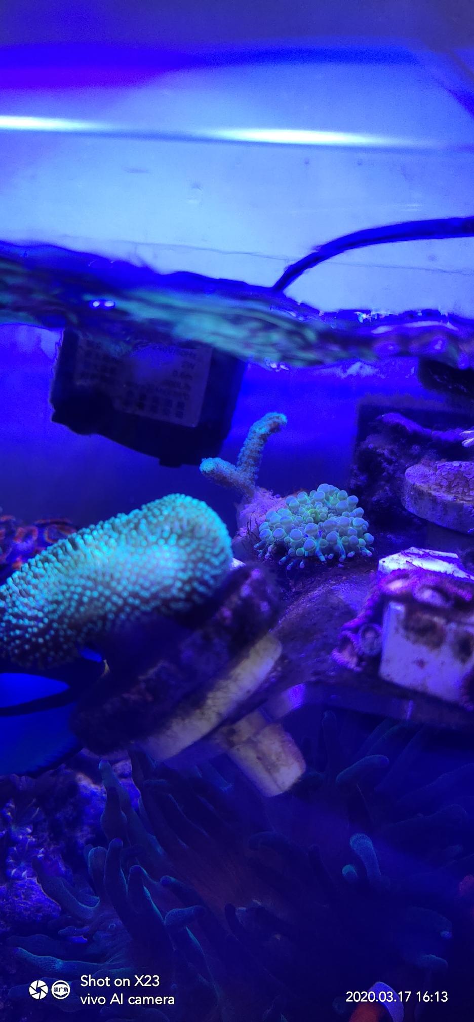 分享一个巴掌大的微缸已经运行6个月 西安观赏鱼信息 西安博特第4张