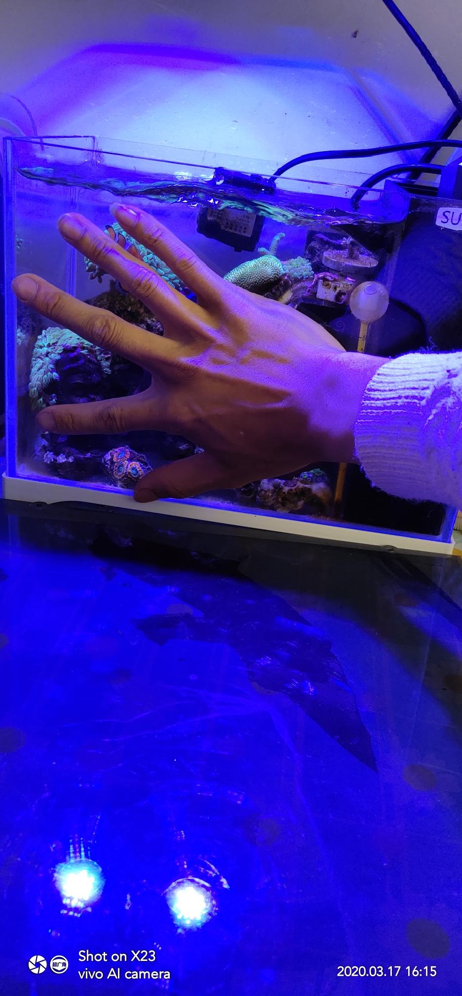 分享一个巴掌大的微缸已经运行6个月 西安观赏鱼信息 西安博特第7张