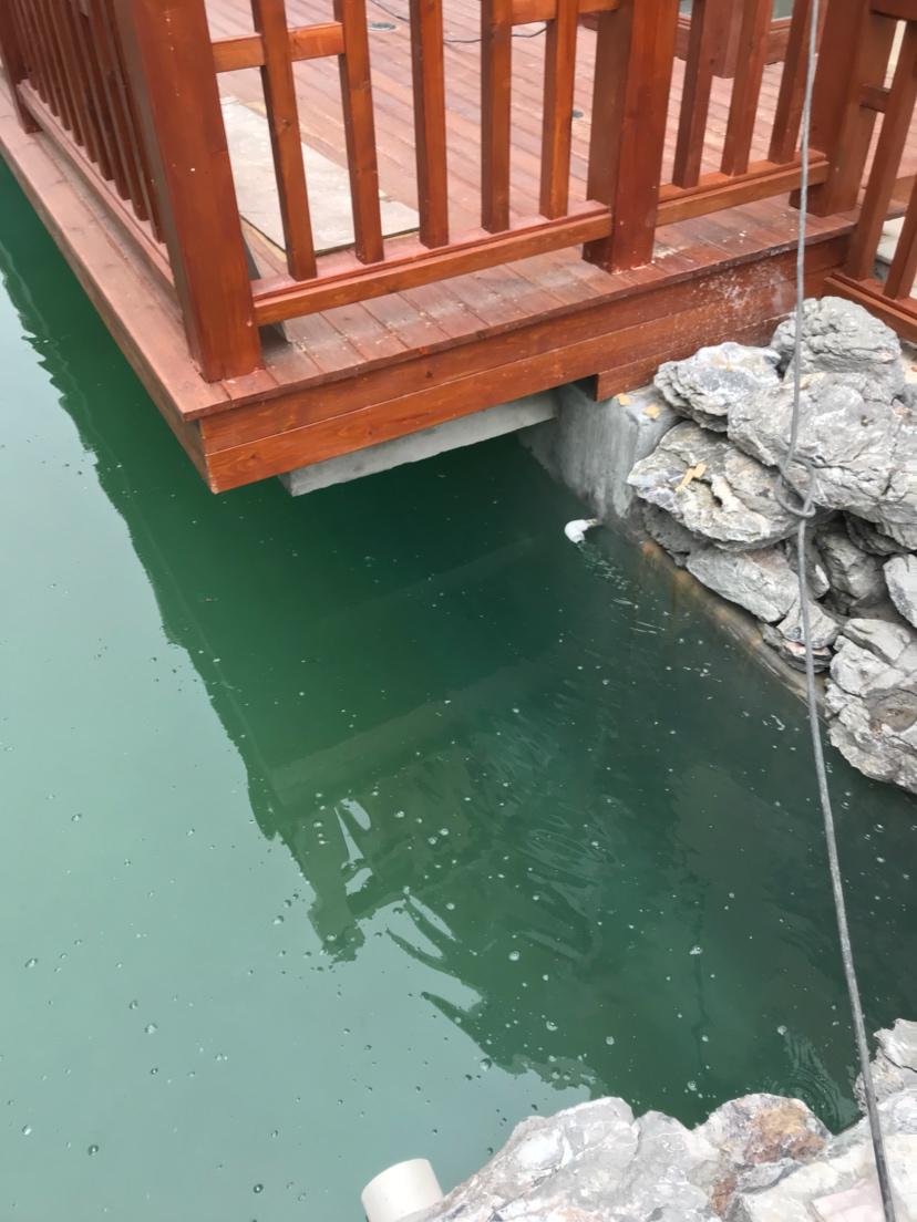 【西安三纹虎】非常可惜的一个鱼池