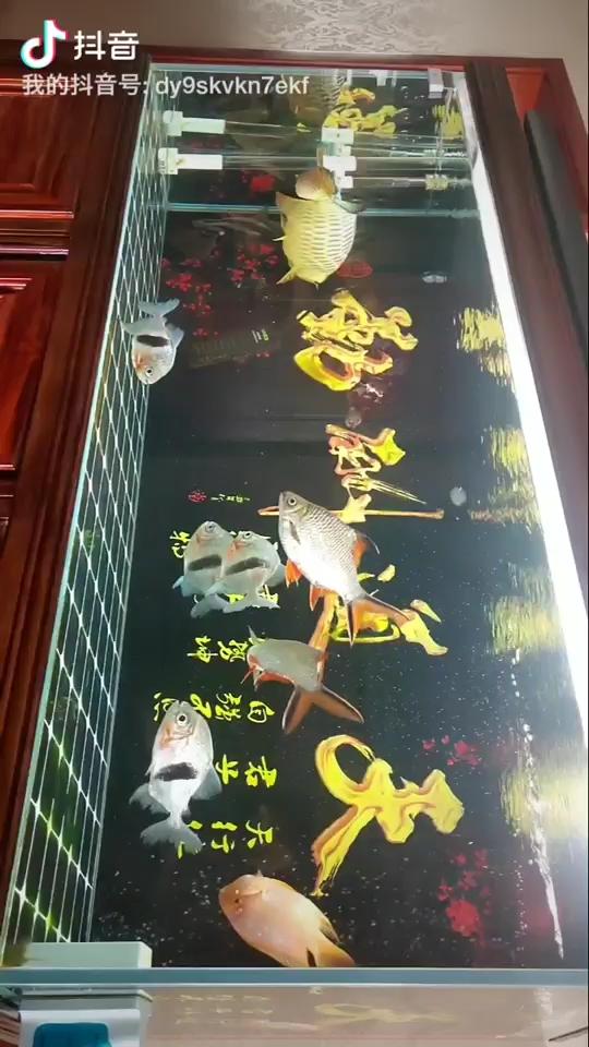 【西安女王大帆】新的一天开始了 西安观赏鱼信息 西安博特第1张