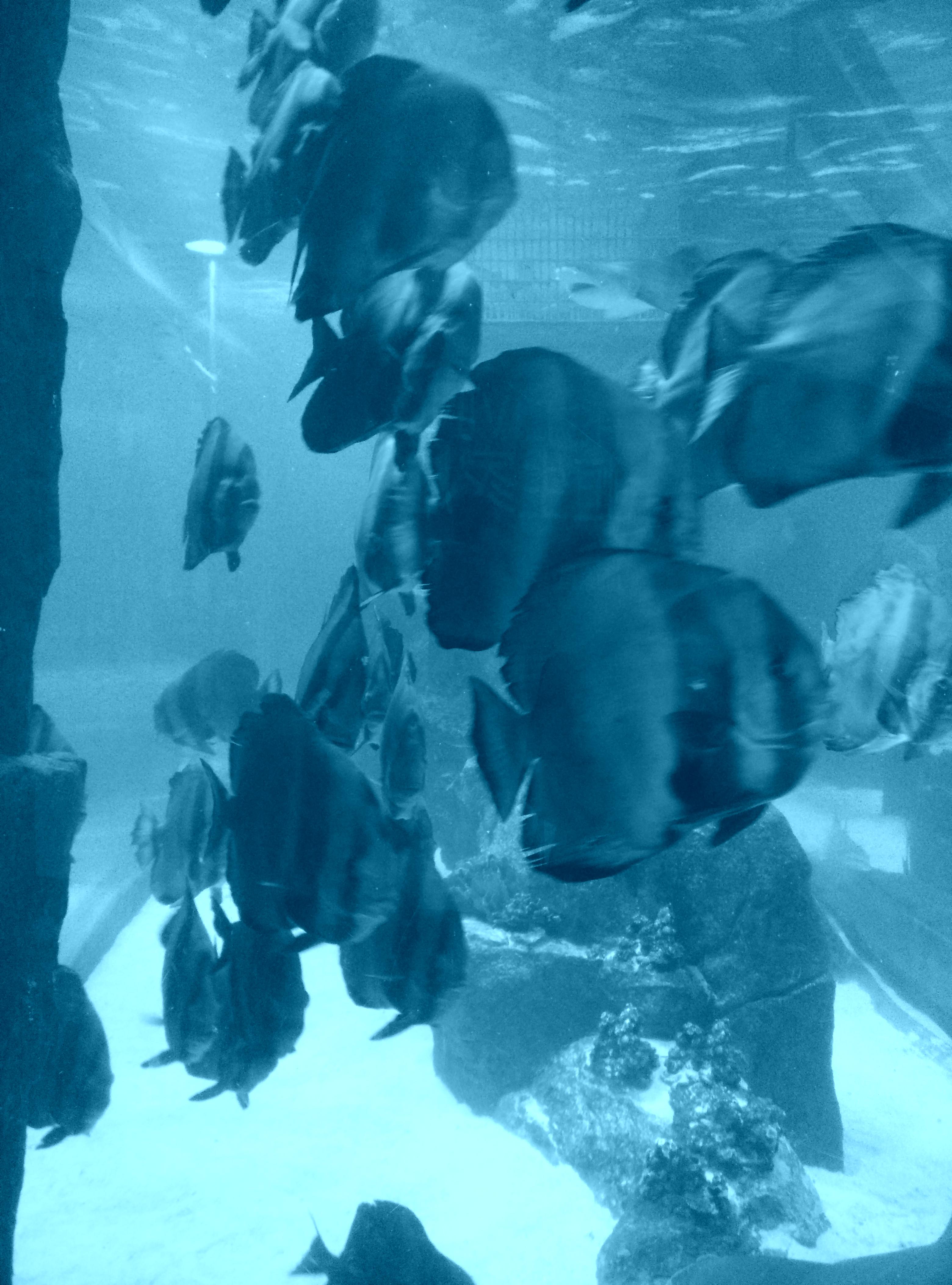 【西安泰金罗汉鱼价格】转水10天现在状态不错 西安龙鱼论坛
