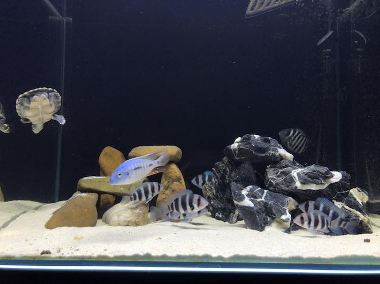 【西安祥龙水族馆】闲着无聊看看鱼拍拍照如此而已 西安龙鱼论坛 西安博特第1张
