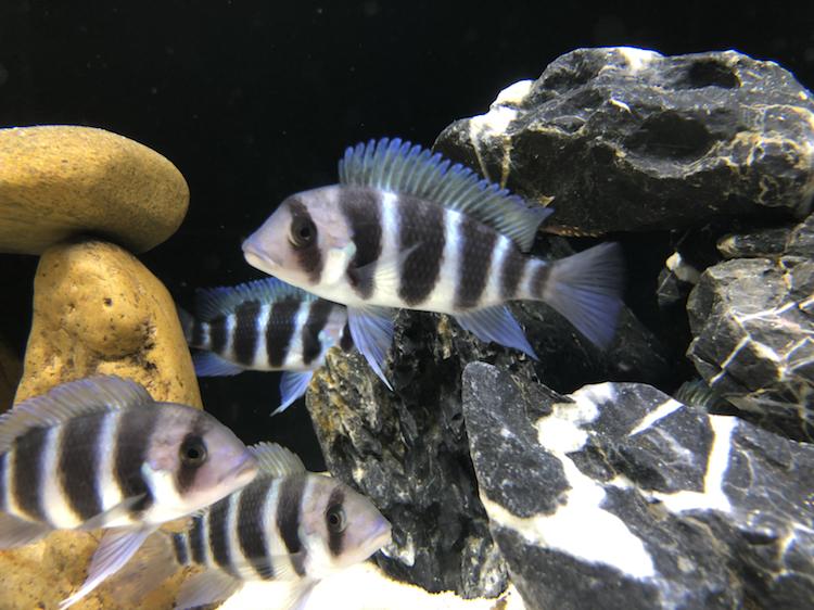 【西安祥龙水族馆】闲着无聊看看鱼拍拍照如此而已 西安龙鱼论坛 西安博特第4张