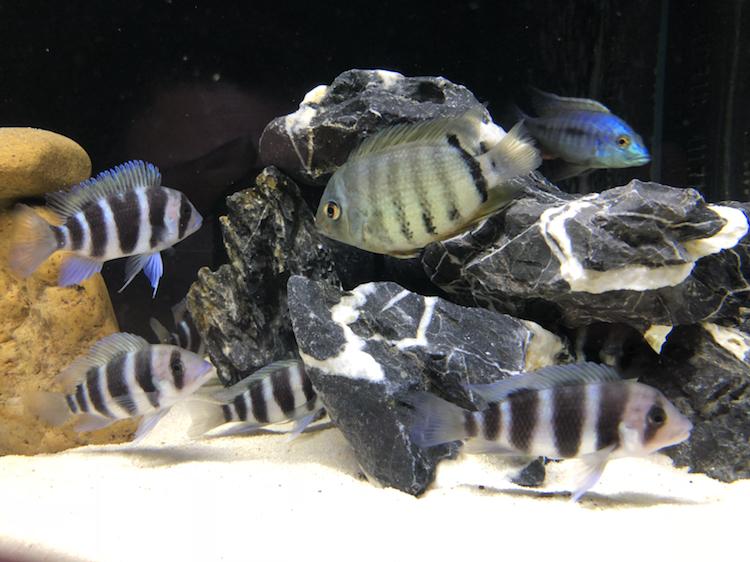 【西安祥龙水族馆】闲着无聊看看鱼拍拍照如此而已 西安龙鱼论坛 西安博特第2张