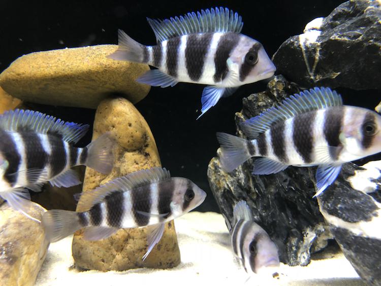 【西安祥龙水族馆】闲着无聊看看鱼拍拍照如此而已 西安龙鱼论坛 西安博特第3张
